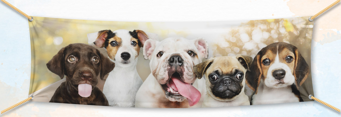 Pet Photo Banners Are Easy To Design And Order