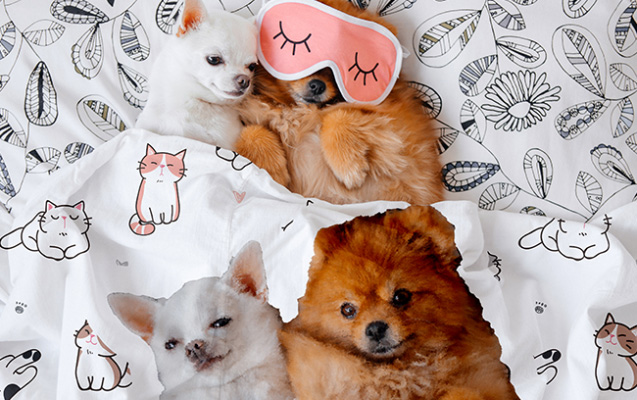 Custom Pet Blankets are easy to design and order