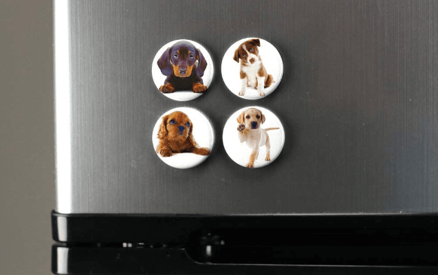 Pet Photo Magnets Are Easy to Design and Order