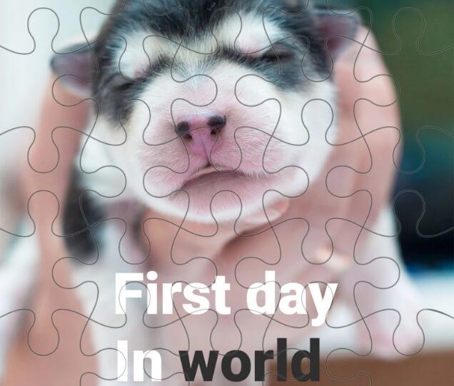 Custom Pet Photo Puzzles